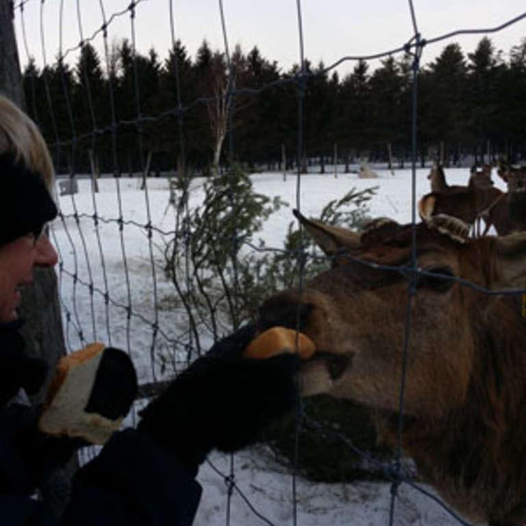 Pour l'amour des animaux !