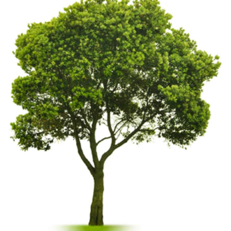 Journée de l'arbre le 27 mai