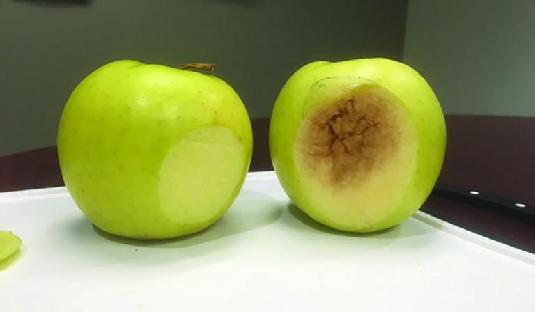 La nouvelle pomme qui ne brunit pas : Une collation santé