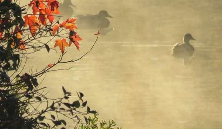 L'automne porte obligée de tout les recommencements