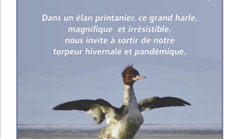 Beautés aviaires
