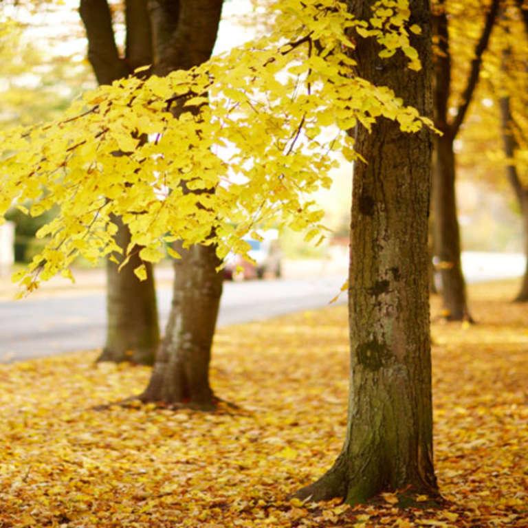 Quoi faire avec vos feuilles mortes ?
